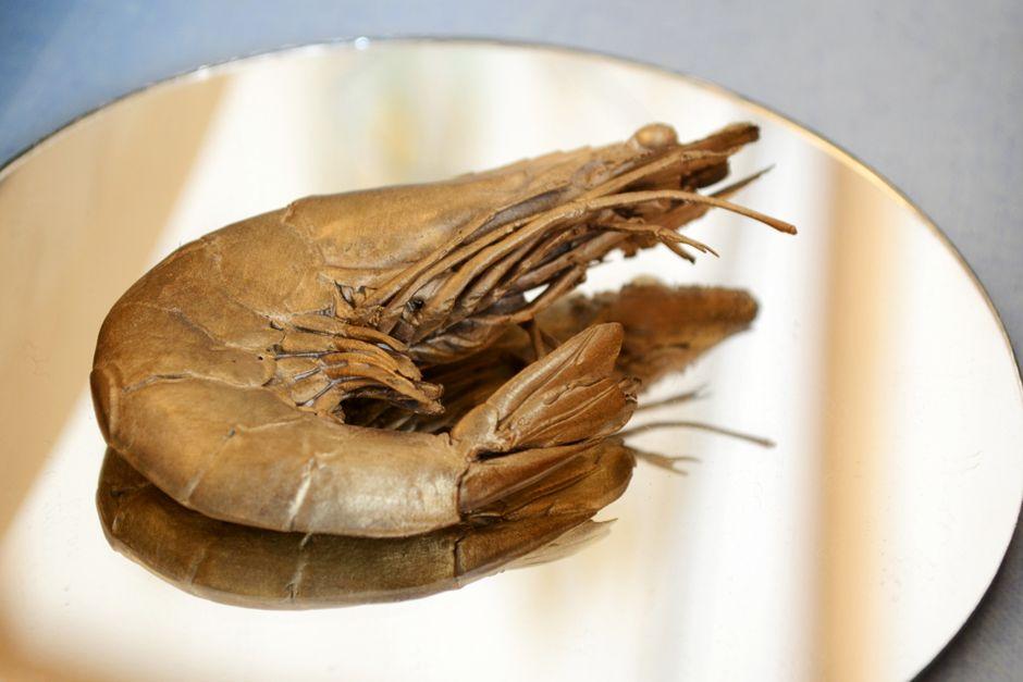 La crevette en laiton de Laurène Vernet - LaFabriQ